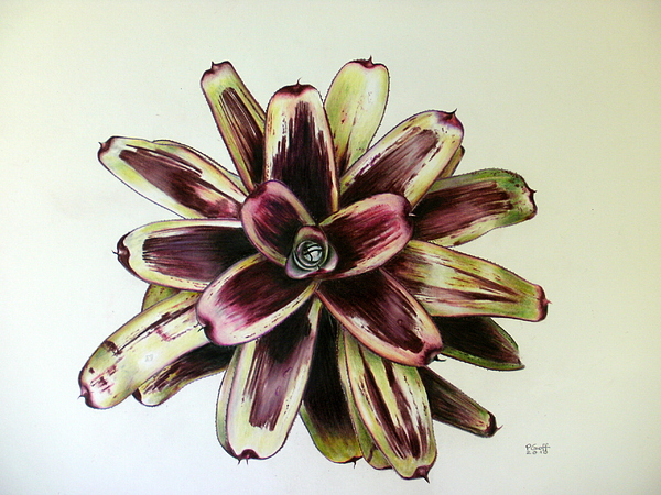 Bromeliad Painting - Neoregelia Painted Delight by Penrith Goff
