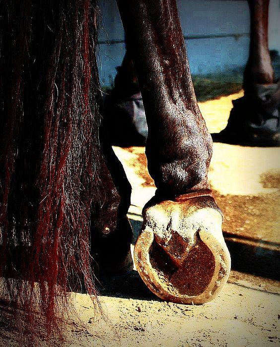 Horse Photograph - New Shoes by Jill Tennison