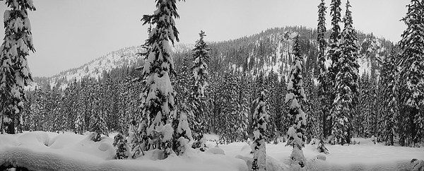 Landscape Photograph - New Snow by Mark Camp