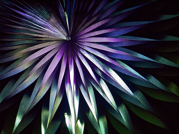 Horizontal Photograph - Night Bloom by Photo ephemera