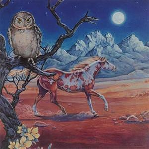 Night Of The Elf Owl Drawing by Eden Alvernaz