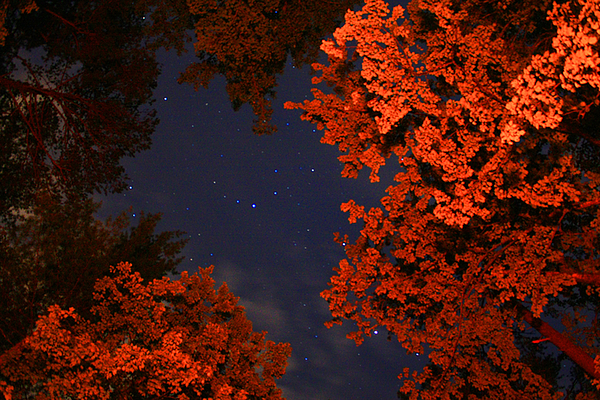 Night Photography Photograph - Night Sky By The Campfire by Gray  Artus