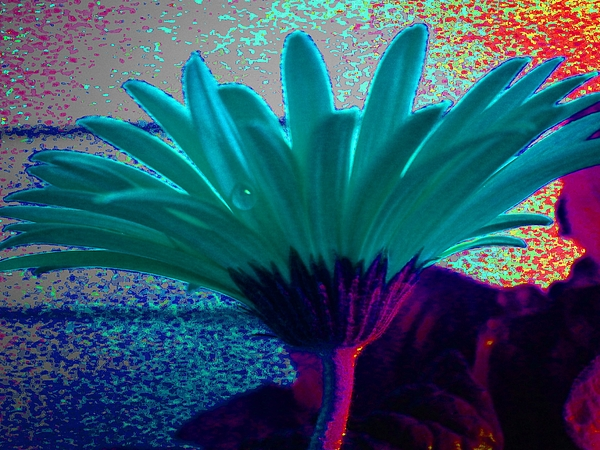 Abstract Flower Photograph - Night Vision by Diana Chason