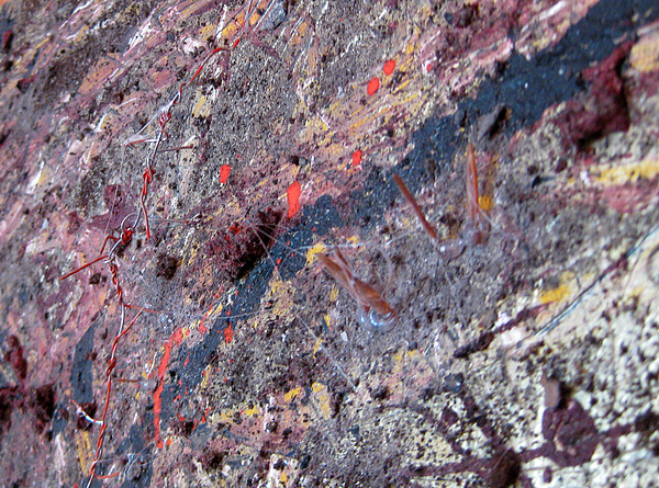 Pollock Painting - No Detail1 by Ckone