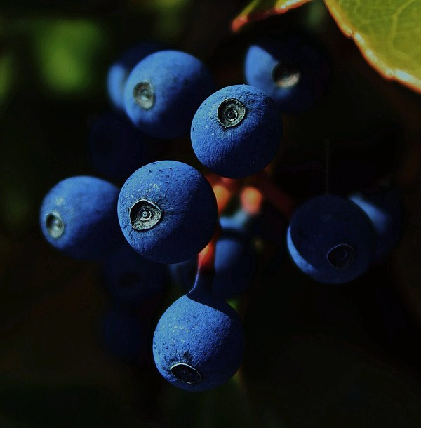 Berries Photograph - Noon by Amy Neal