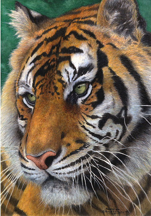 Tiger Painting - Nostalgia by Brad Carraway