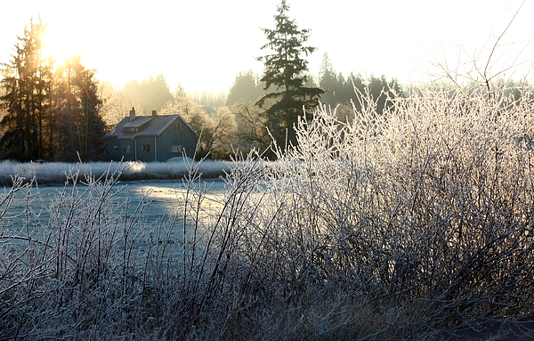 Frost Photograph - November Morning by Barbara  White