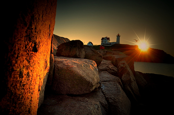 Nubble Lighthouse Photograph - Nubble Seagull by Emily Stauring