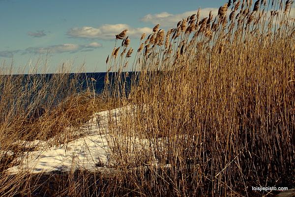 Ocean Photograph - Ocean View Through The Grasses by Lois Lepisto
