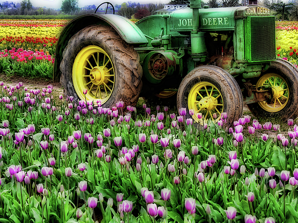 Tulips Photograph - Old And New by Bonnie Bruno