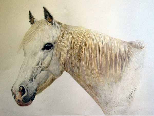 Horses Drawing - Old Grey by Sue Ireland