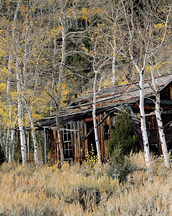 Colorado Photograph - Old Homestead by Jim Benest