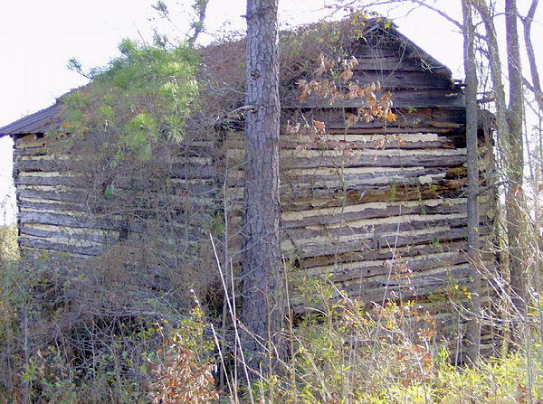 Old Photograph - Old Tobacco Barn by Linda Bennett