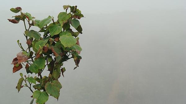 Mist Photograph - On A Hilltop In Mirik by Abir Bordoloi