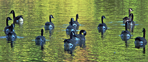 Geese Digital Art - On Golden Pond by DigiArt Diaries by Vicky B Fuller