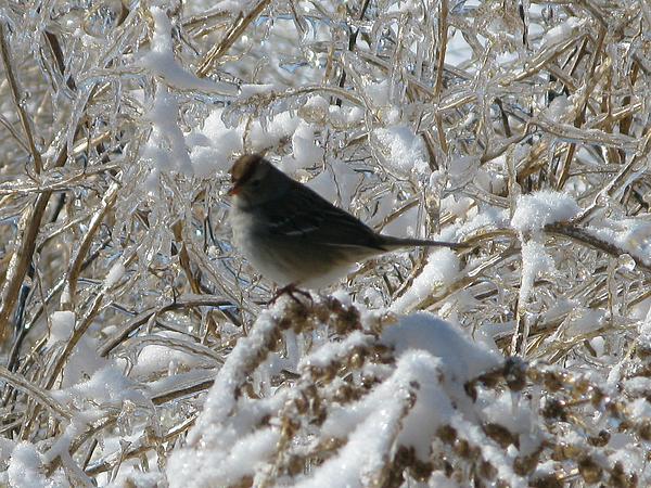 Birds Photograph - On Thin Ice by Martie DAndrea