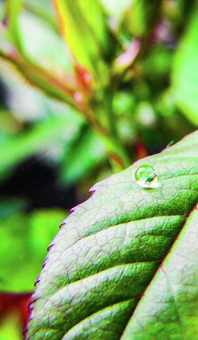 Leaves Photograph - One Waterdrop by Cesar Vieira