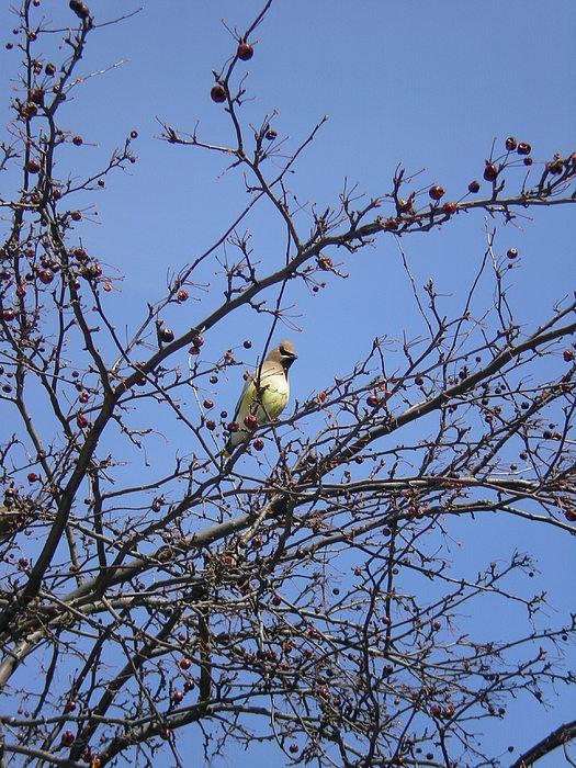 Bird Photograph - Ontario Wildbird by Shigeo Akiyama