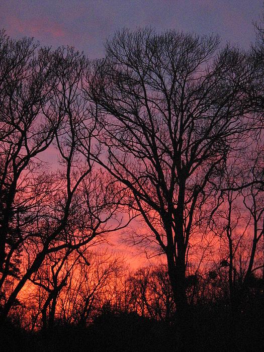 Nature Photograph - Orange Sunset by George Marian Predut
