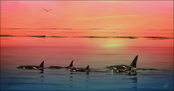 Photograph Digital Art - Orca Sunset by Rick Lawler