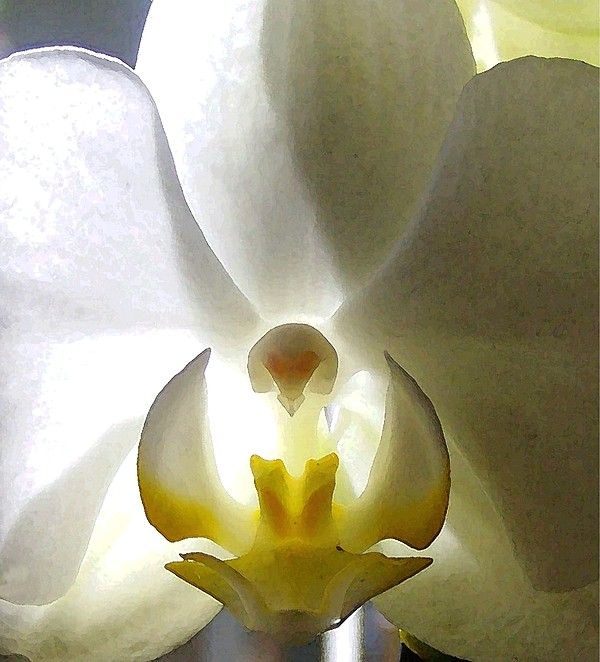 Orchid Photograph - Orchid - The Wallflower by Dina Sierra