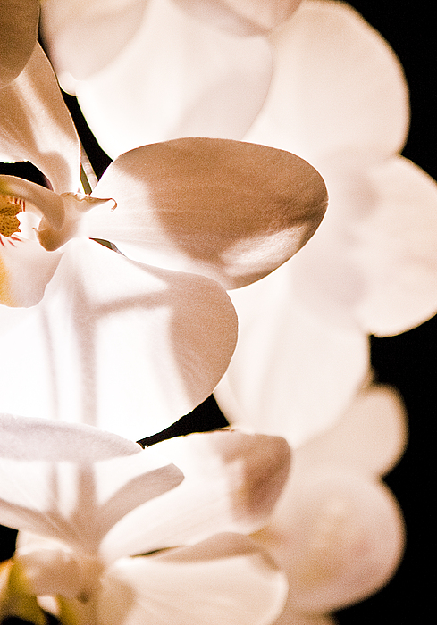 Orchid Photograph by Nora Batternay