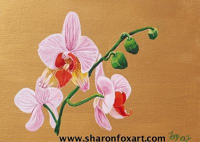 Floral Painting - Orchid Study Phalaenopsis White by Sharon Fox-Mould