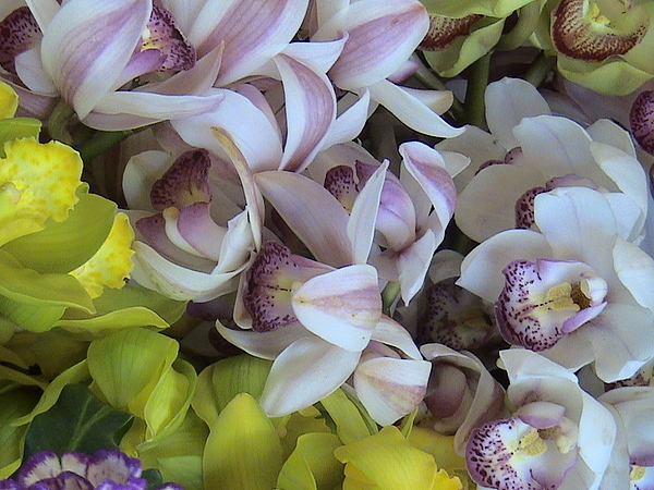 Nature Photograph - Orchids by William Thomas