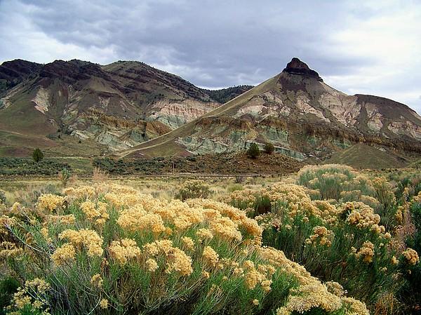 Desert Photograph - Oregon Fossil Beds by Terry Jones