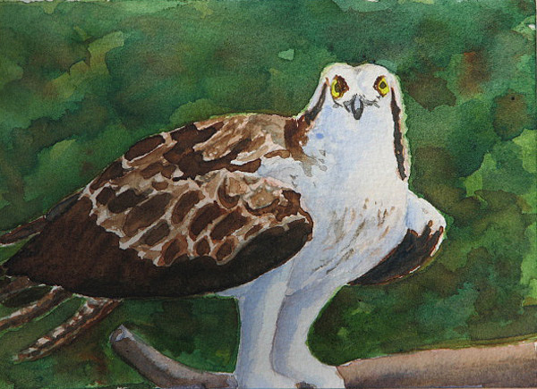 Bird Painting - Osprey - Miniature by Libby  Cagle