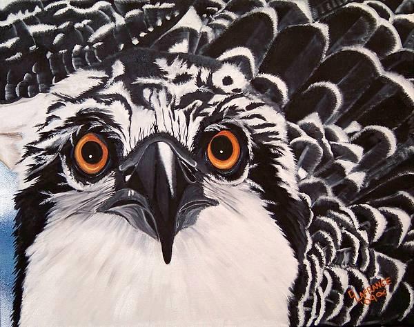 Debbie LaFrance - Osprey Eyes