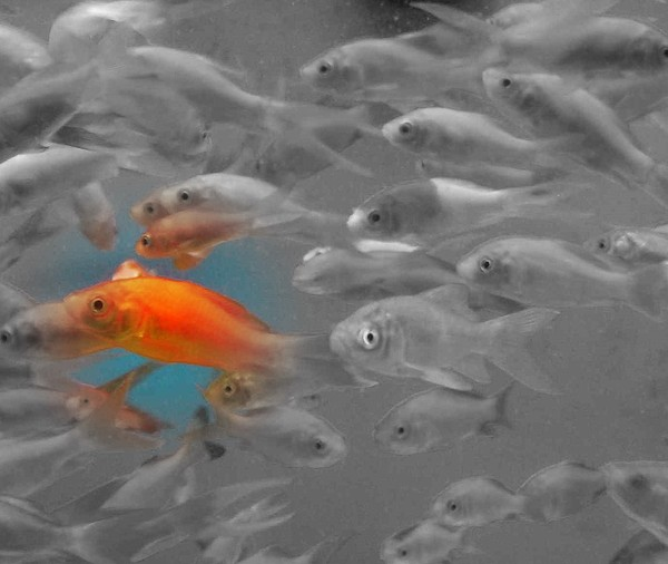Goldfish Photograph - Out Of Sinc by Sandie Smith