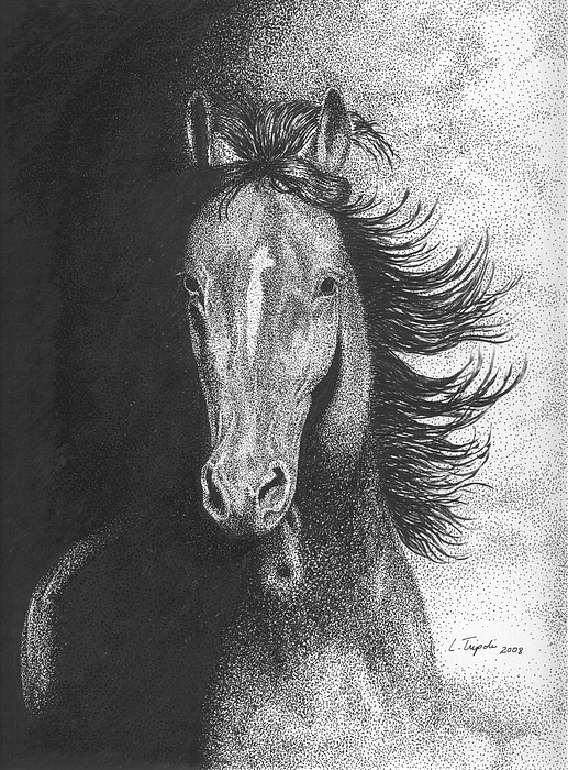 Horse Drawing - Out Of The Shadows by Lawrence Tripoli