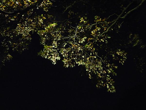 Nikon Photograph - Overhead Branch by Nik Watt