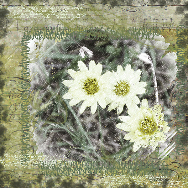 Daisies Digital Art - Package Of Three by Nadine Berg