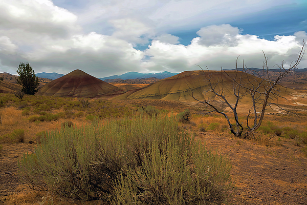Painted Hills Photograph - Painted Hills Landscape In Central Oregon by David Gn