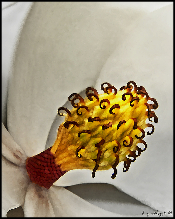 Flora Photograph - Painted Magnolia by Daniel G Walczyk