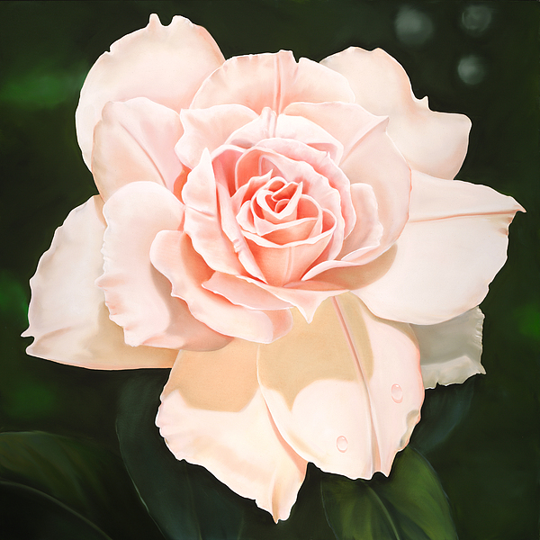 Flower Painting - Pale Pink Rose by Ora Sorensen
