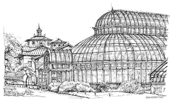 Palm Drawing - Palm House In Brooklyn Botanic Gardens by Adendorff Design
