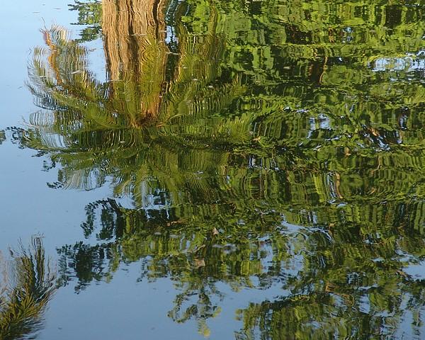 Palm Photograph - Palm Mirror by Florene Welebny