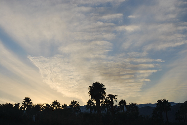 Palm Photograph - Palm Sunset by Jessica Saenz