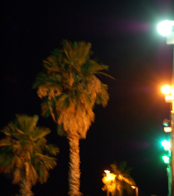 Palm Tress Photograph - Palm Tree Glow by Heather S Huston