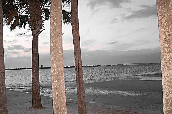 Sarasota Photograph - Palm Trees by Casey Beckman
