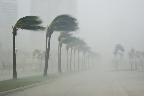 Day Photograph - Palms Blow In 100 Mile-per-hour Winds by Mike Theiss