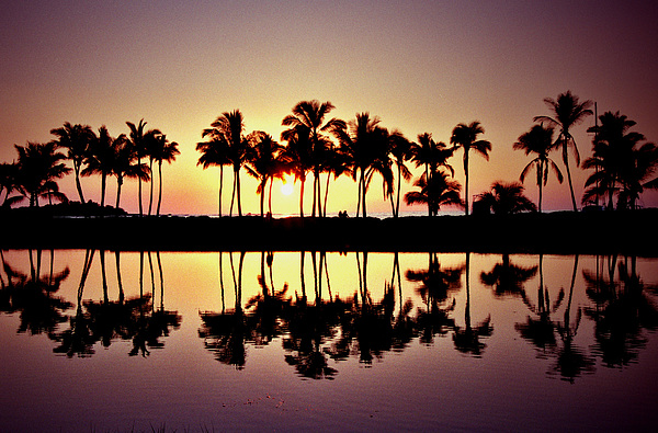 Hawaii Photograph - Palms In Silhouette by Michael  Cryer