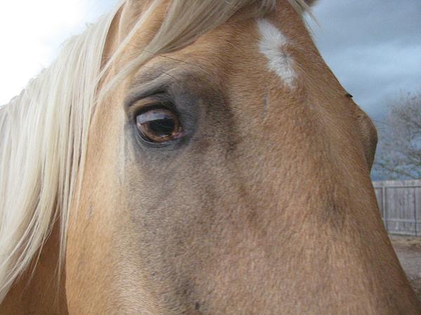 Horses Photograph - Palomino Mare At Tres Amigos Ranch by Wendell Baggett