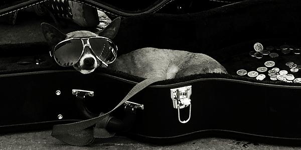 Dog Photograph - Panhandling Dog by Julie Niemela