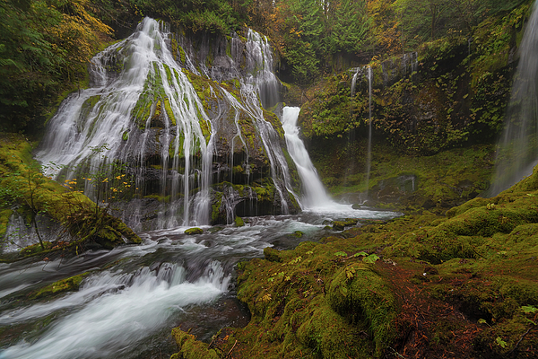 Panther Creek Falls Photograph - Panther Creek Falls In Autumn by David Gn