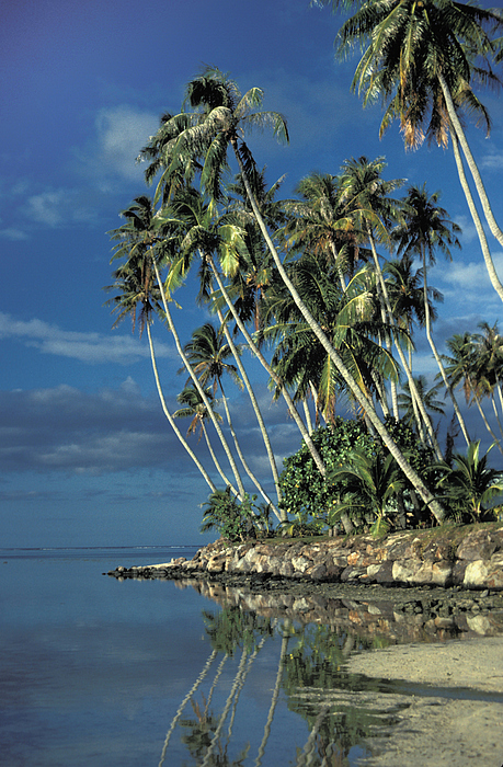 Palm Trees Photograph - Paradise by Marc Bittan