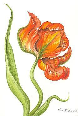 Flower Painting - Parot Tulip by Elizabeth H Tudor